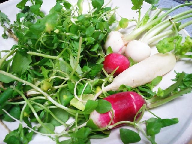 七草粥とはいつ食べるの?食べる理由と春の七草の種類や栄養成分・効果